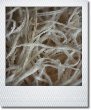画像1: ソフトスパニッシュモス 『ホワイト』 【再入荷】