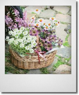 画像1: 母の日ギフト『お花畑みたいなバスケット』 *4種苗入り*