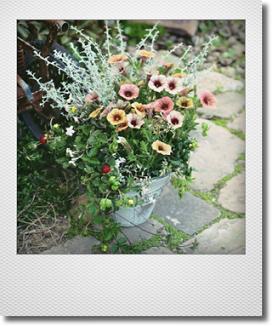 画像1: 【送料込み!!】 母の日の寄せ植え * アンティークペチュニア*