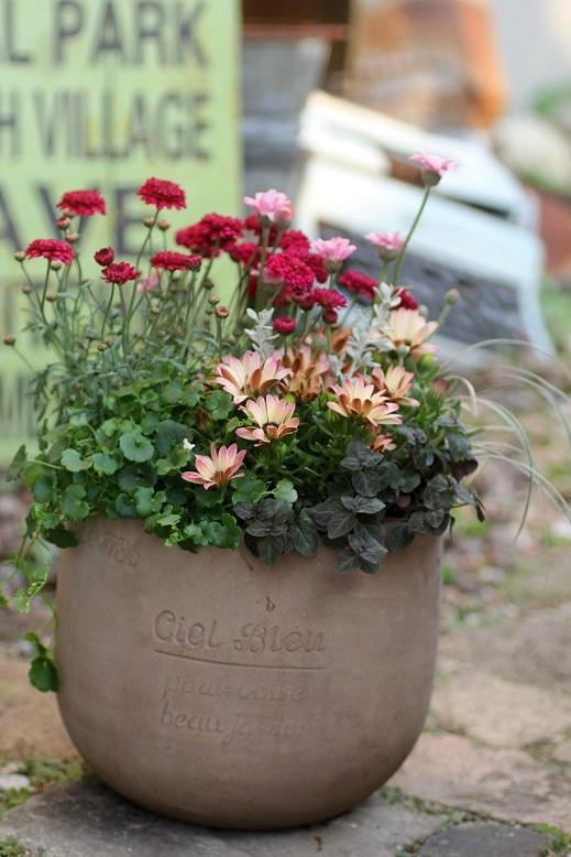画像2: 【送料込み!!】 春の寄せ植え『春うらら』