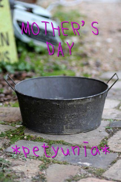 画像1: 母の日!! ありがとうのお任せ寄せ植え『ペチュニアver』