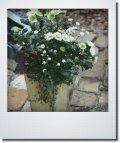秋の寄せ植え 『クリサンセマム スプラッシュメドゥ&シオン』*送料無料*