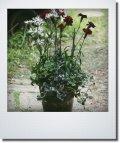母の日の寄せ植え 『ガーデンカーネーション』