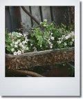 ワイヤーかごに初夏の寄せ植え 『ミニチュニア』