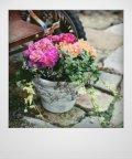 花束みたいな寄せ植え 『プリムラ パロマ』 *イエロー&ピンク*