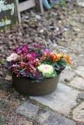 冬から春を楽しむ寄せ植え『ハボタン&小輪ビオラ テラコッタ』