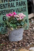 シンプルに楽しむ冬の寄せ植え『ガーデンシクラメンPIPOKA』