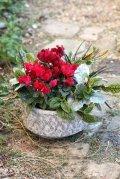 冬の寄せ植え『大人のシクラメン』