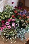 お花が大好きなお母様へ♪母の日!!春爛漫の苗セットです