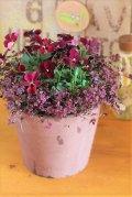 冬の寄せ植え『パピヨンとモスみたいなクローバー』