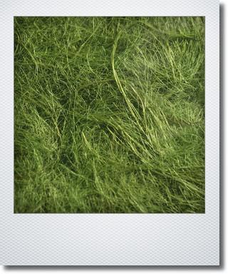 画像1: ジュートファイバー 『ライムグリーン』