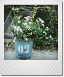 画像1: 春爛漫な寄せ植え♪