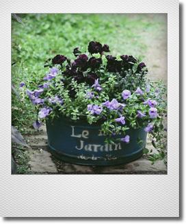画像1: 夏も元気なflower garden! 『ブラックペチュニア&トレニア』