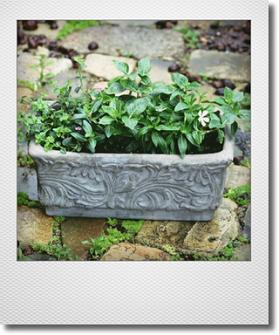 画像1: これからもりもりして楽しめる 『夏の寄せ植え♪』 ※鉢にカケあり特価です