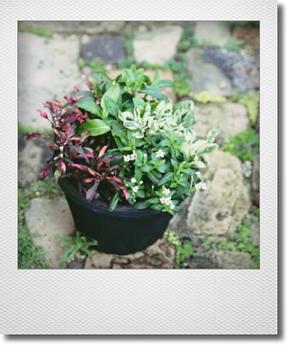 画像1: これからもりもりして楽しめる 『夏の寄せ植え♪』 *No.2*