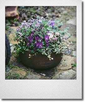 画像1: 見元ビオラで春爛漫の寄せ植え