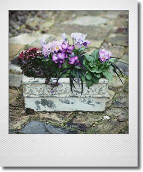 画像1: 春待ちの寄せ植え『マイファニープリンセス』