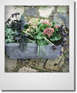 画像1: 春待ちの寄せ植え『ジュリアン・ショコラ』