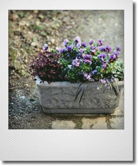 画像1: 【送料無料!!】春待ちの寄せ植え『フロチョコ』