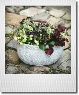 画像1: 【送料込み!!】 春の寄せ植え『ロヤルパープルエッジ』