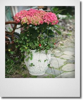 画像1: 【送料込み!!】 母の日の寄せ植え * 秋色アジサイ *