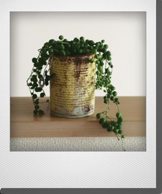 画像1: maako'sペイント缶に寄せ植え 『グリーンネックレス』 *イエローNo.2*