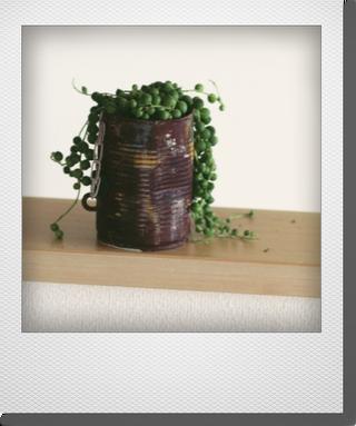 画像1: maako'sペイント缶に寄せ植え 『グリーンネックレス』 *ブラウン*