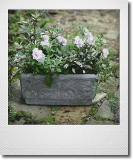 画像1: 【送料無料!!】 夏の寄せ植え 『ペチュニア パニエ』