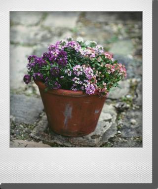 画像1: maako'sペイント鉢に寄せ植え 『アリッサム』 *オレンジ*