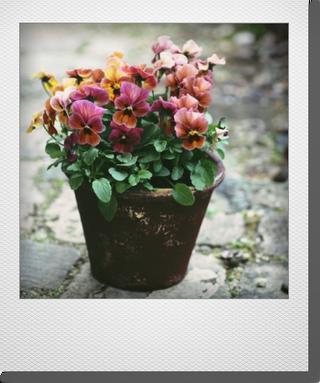 画像1: maako'sペイント鉢に寄せ植え 『マンゴーアンティーク』 *ブラウン*