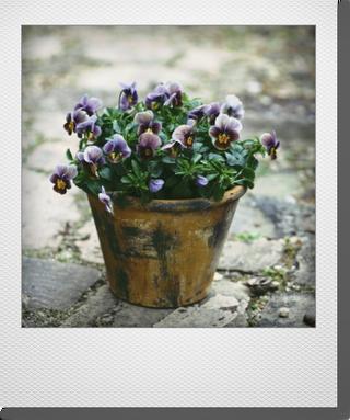 画像1: maako'sペイント鉢に寄せ植え 『フロチョコ』 *イエロー*