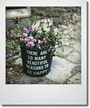 画像1: 冬から春を楽しむ寄せ植え『見元ビオラ』