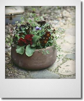 画像1: 【送料無料!!】冬から春を楽しむ寄せ植え『夕香』