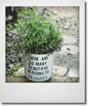 画像1: 【送料込み!!】春の寄せ植え『ガイラルディアピンクスパーク』