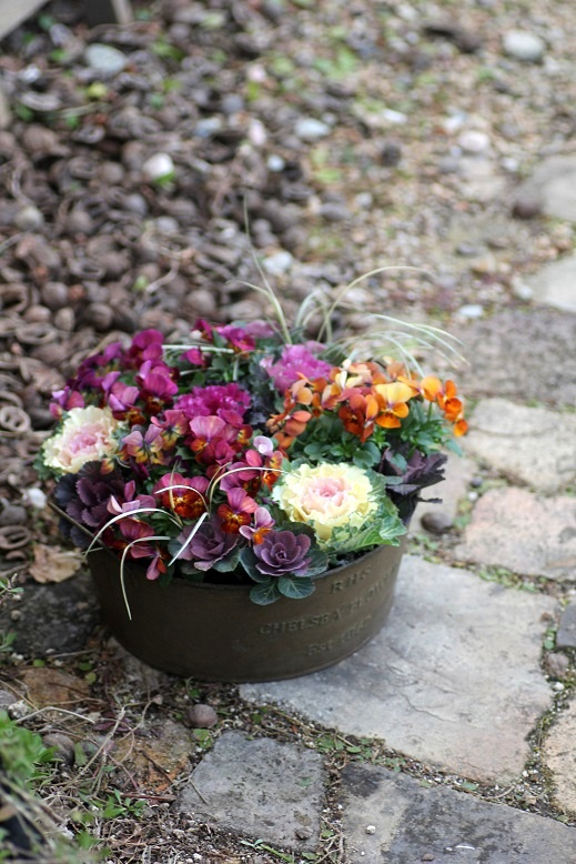 画像2: 冬から春を楽しむ寄せ植え『ハボタン&小輪ビオラ テラコッタ』