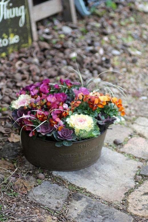 画像1: 冬から春を楽しむ寄せ植え『ハボタン&小輪ビオラ テラコッタ』