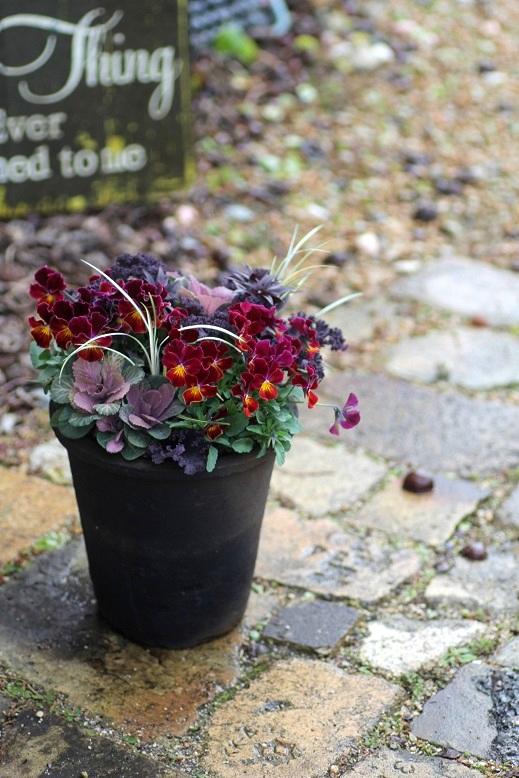 画像1: お正月の寄せ植え『ハボタン&フェアリーフェネック』