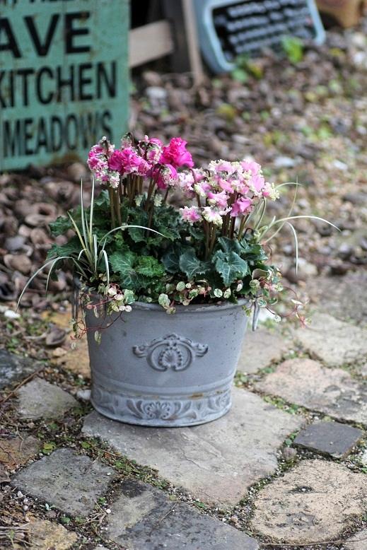 画像3: シンプルに楽しむ冬の寄せ植え『ガーデンシクラメンPIPOKA』