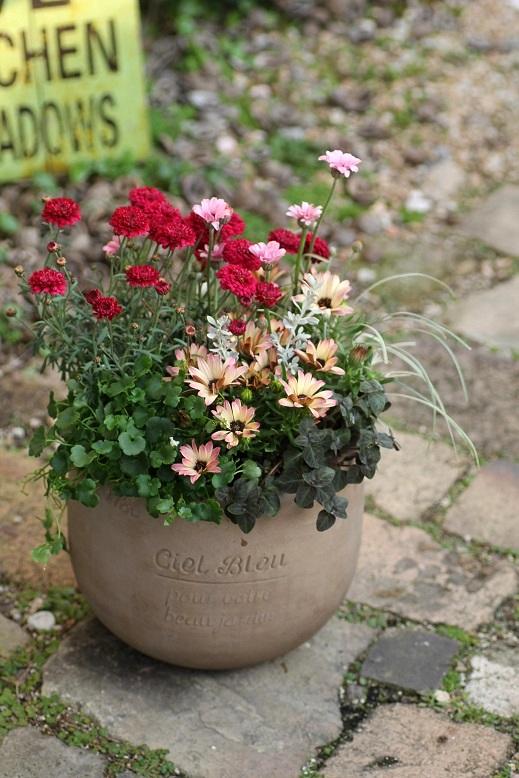 画像1: 【送料込み!!】 春の寄せ植え『春うらら』