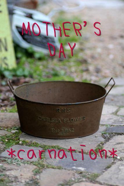 画像1: 母の日!! ありがとうのお任せ寄せ植え『ガーデンカーネーションver』