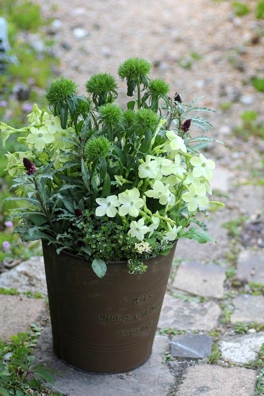 画像1: 【送料込み!!】 初夏の寄せ植え『グリーングリーン』