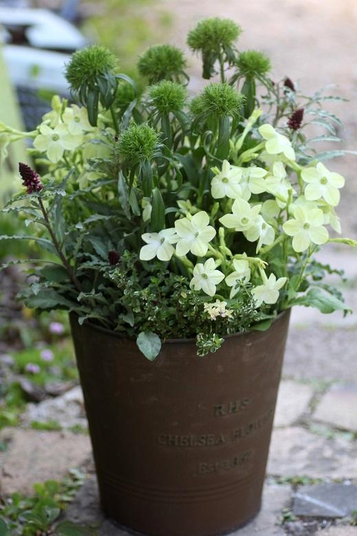 画像2: 【送料込み!!】 初夏の寄せ植え『グリーングリーン』