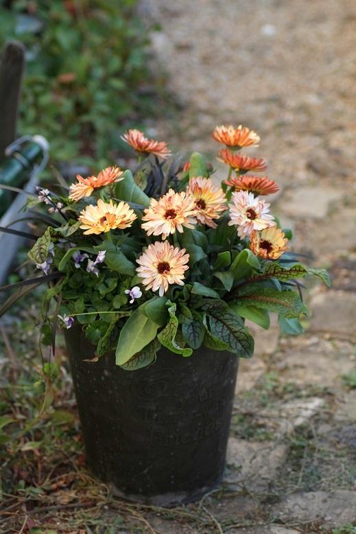 画像1: 冬の寄せ植え『野に咲く花のように』