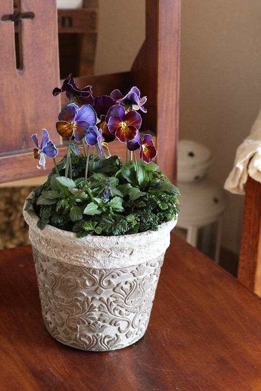 画像1: 冬の寄せ植え『フレアブルーの高級感』