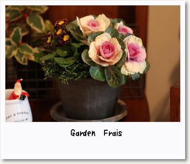 画像1: 室内でも楽しめる『クリスマスの寄せ植え』