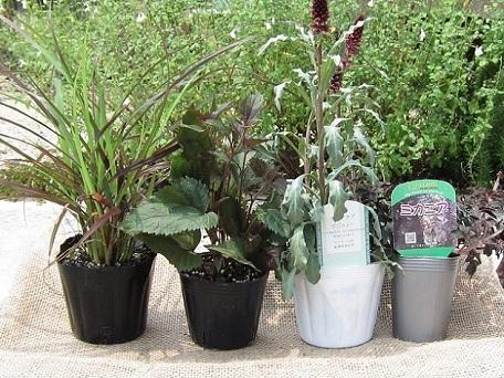 画像1: 寄せ植え苗セット 4種
