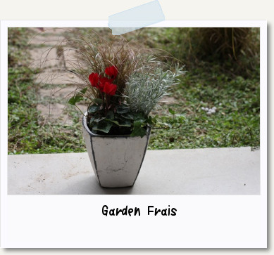 画像1: 寄せ植え*ガーデンシクラメン*